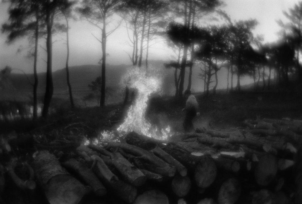 Firewood stocking in Çanakkale surroundings, situated near Dard