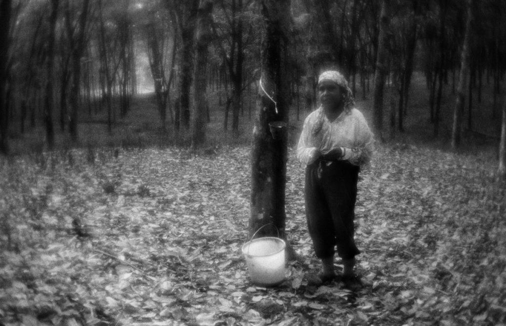 Сaoutchouc plantation. East from Sitiawan. Malaysia, June 2012