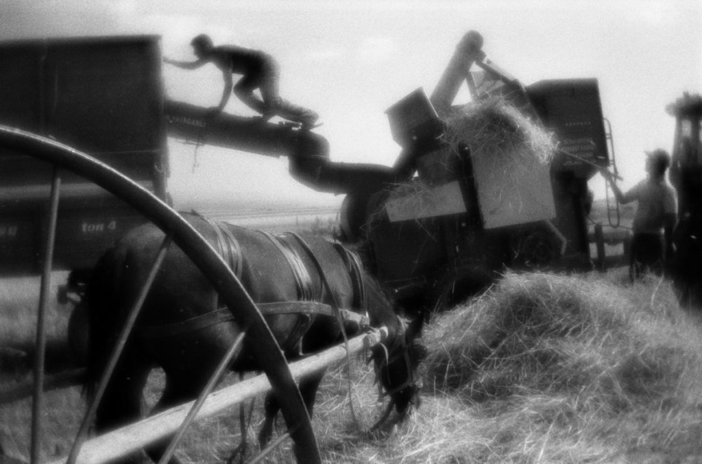Harvesting the wheat near Erzurum. Turkey, August 2013