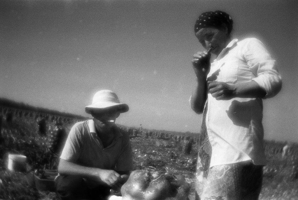 Harvesting onions. Volgograd region, 18.09.2017